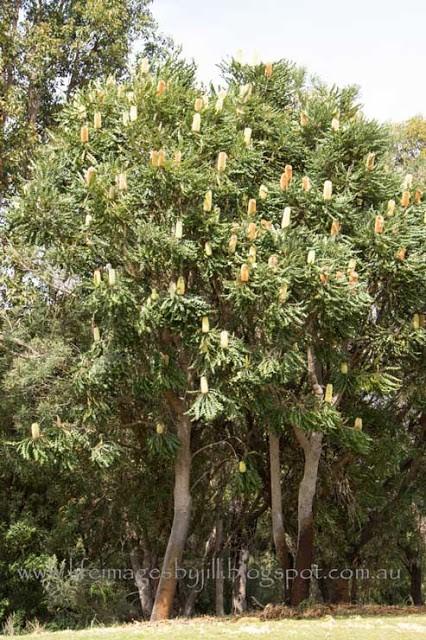 trees-8